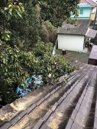 今治市O様住宅に強風で大木が当たり片流れ棟を破損した現場 木の向こう側
