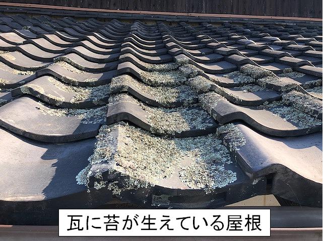 屋根瓦に苔が生えている写真