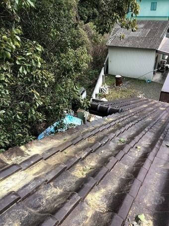 今治市O様住宅に強風で大木が当たり片流れ棟を破損した現場 木を伐りました