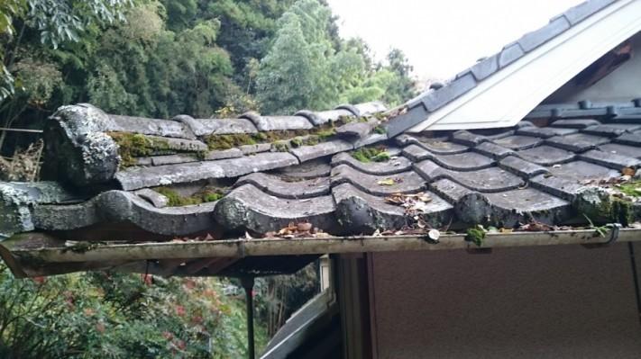 屋根に苔が生えている