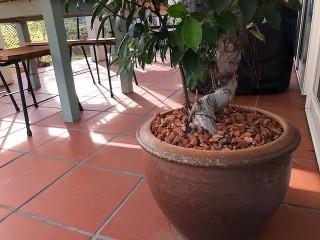 観葉植物にRテコラを施工した後の写真