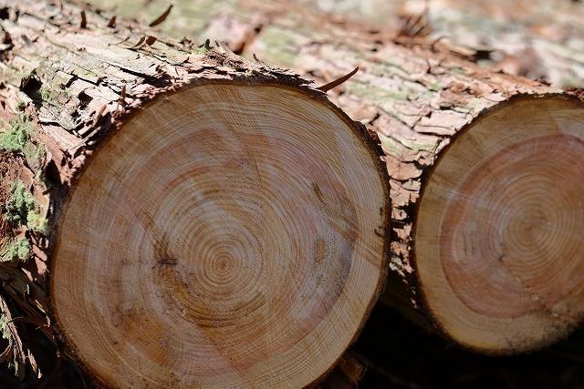 南九州産の杉を写した写真